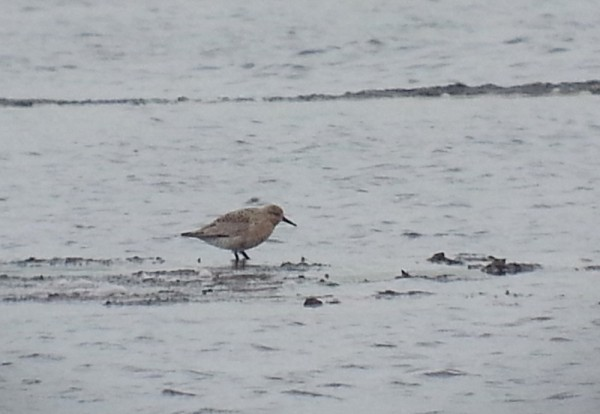 CCR Knot on Pack South2 30052016