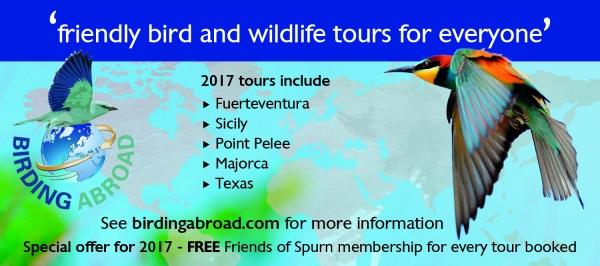 Birding Abroad web ad landscape