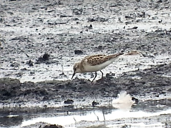 one of the two Little Stints today on Packard's South by Chris Robinson