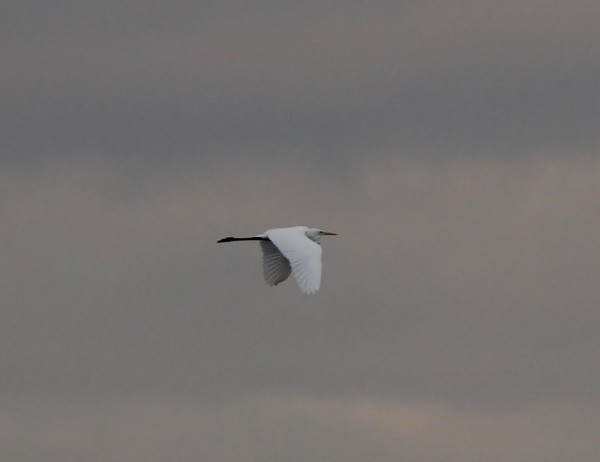 pl-gwe-flying-east-over-new-moor-this-evening